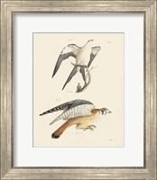 Framed Birds of Prey I