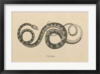 Framed Vintage Viper