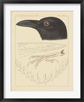 Framed Bird Prints II