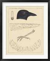 Framed Bird Prints I