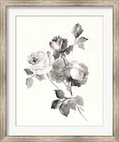 Framed Rose Blossoms Gray