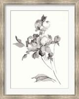 Framed Peony Blossoms Gray