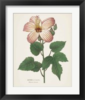 Framed Antique Botanical XXVII Cream