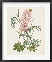 Framed Antique Botanical LVII Cream