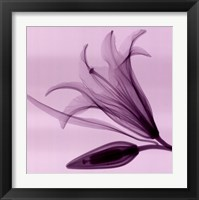Framed Lily Bud