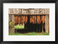 Framed Tobacco Barn