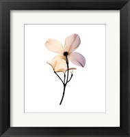 Framed Dogwood 2