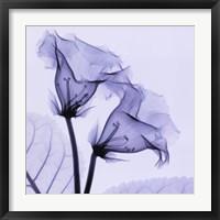 Gloxina Framed Print