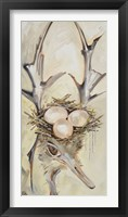 Framed Ostrich with Antlers