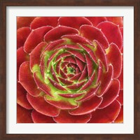 Framed Fuzzy Red Succulent