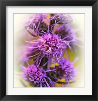 Framed Meadow Flowers