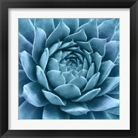 Framed Silvery Blue Agave