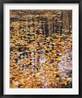 Framed Autumn Detail