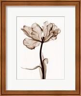 Framed Parrot Tulips I