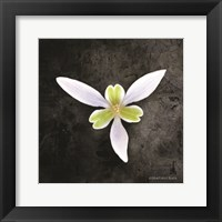 Framed Contemporary Floral Trillium