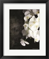 Framed Contemporary White Orchids
