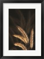 Framed Golden Grass I