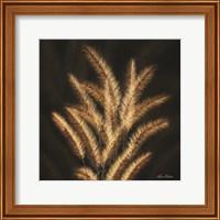 Framed Golden Grass II