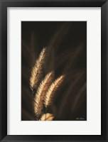 Framed Golden Grass III