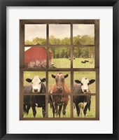 Framed Three Moo View