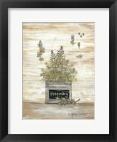 Framed Rosemary Botanical