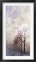 Framed First Light Winter Forest