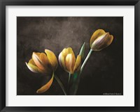 Framed Contemporary Floral Tulips