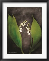 Framed Contemporary Floral Lily of the Valley