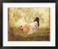 Framed Vintage Scratching Rooster