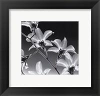 Framed Orchid Denrobium