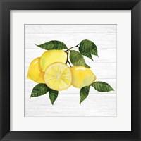 Framed Citrus Garden VI Shiplap