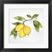 Framed Citrus Garden I Shiplap
