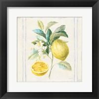 Framed Floursack Lemons IV Sq Navy