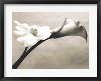 Framed Calla-Anemone