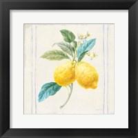 Framed Floursack Lemons III Sq Navy