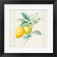 Framed Floursack Lemons II Sq Navy