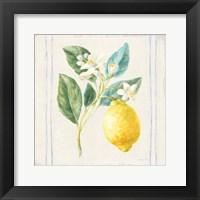 Framed Floursack Lemons I Sq Navy