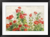 Framed Red Geraniums on White v2