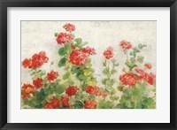 Framed Red Geraniums on White v2