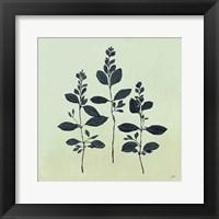 Framed Botanical Study IV Sage
