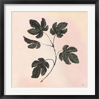 Framed Botanical Study III Blush