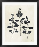 Framed Botanical Study IV