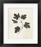 Framed Botanical Study III