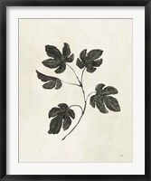 Framed Botanical Study III
