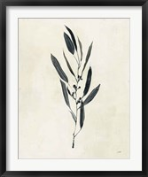 Framed Botanical Study I