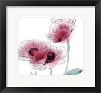Framed Sketched Poppies 1