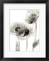 Framed Sketched Poppies 2