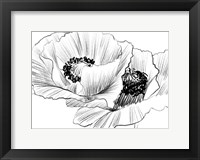 Framed Sketched Poppies 3