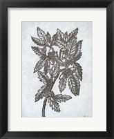 Framed Oak Tree 1
