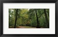 Framed Woods Wanderer 1
